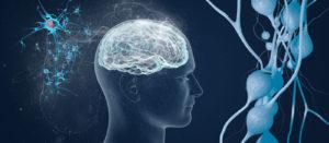 Нейроны и мозг человека