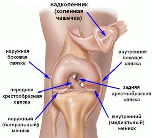 Изображение - Поражение связок коленного сустава Svyazki-kolena-300x273
